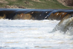 cascade à écriture ligne par ligne branchante de poissons Photos stock