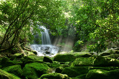 Cascade à écriture ligne par ligne cachée de forêt tropicale Images libres de droits