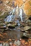 Cascade à écriture ligne par ligne d'automne Photos libres de droits