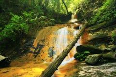 Cascade à écriture ligne par ligne d'or de forêt Photo libre de droits