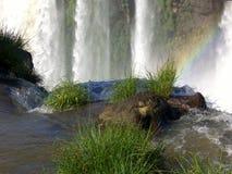 Cascade à écriture ligne par ligne d'Iguaçu Photographie stock libre de droits