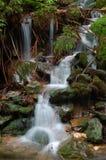 Cascade à écriture ligne par ligne dans la forêt Photographie stock libre de droits