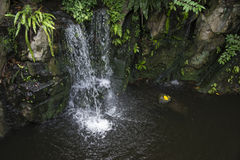 Cascade à écriture ligne par ligne dans la forêt humide Photographie stock