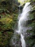 Cascade à écriture ligne par ligne dans la forêt humide Image libre de droits