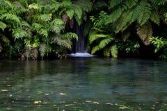 Cascade à écriture ligne par ligne dans la forêt humide, Nouvelle Zélande Photo libre de droits