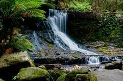 Cascade à écriture ligne par ligne dans la forêt profonde Photo stock