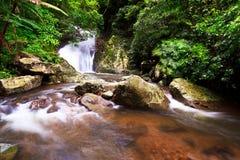 Cascade à écriture ligne par ligne dans la forêt tropicale Photo libre de droits