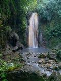 Cascade à écriture ligne par ligne dans la forêt tropicale image stock