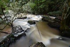 Cascade à écriture ligne par ligne dans la forêt verte Photographie stock libre de droits
