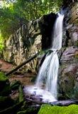 Cascade à écriture ligne par ligne dans la forêt verte Image stock