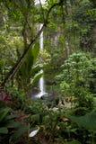 Cascade à écriture ligne par ligne dans la jungle Images libres de droits