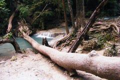 Cascade à écriture ligne par ligne dans la jungle Photo libre de droits