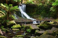 Cascade à écriture ligne par ligne dans la région sauvage tasmanienne Photos stock