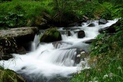 Cascade à écriture ligne par ligne dans une forêt Images libres de droits