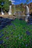 cascade à écriture ligne par ligne de chute de la lily photos libres de droits