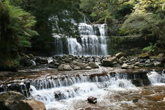 Cascade à écriture ligne par ligne de forêt humide Photographie stock libre de droits