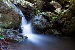 Cascade à écriture ligne par ligne de forêt humide photos stock