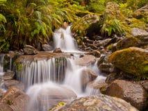 Cascade à écriture ligne par ligne de forêt humide Photo stock