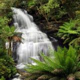 Cascade à écriture ligne par ligne de forêt humide