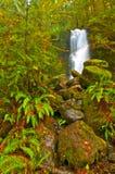 Cascade à écriture ligne par ligne de forêt humide Image stock