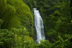 cascade à écriture ligne par ligne de forêt humide de jungle Photographie stock