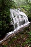 Cascade à écriture ligne par ligne de forêt tropicale Images stock