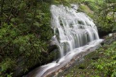 Cascade à écriture ligne par ligne de forêt tropicale Image libre de droits