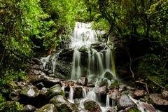 Cascade à écriture ligne par ligne de jungle Photos libres de droits