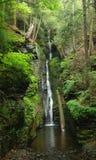 cascade à écriture ligne par ligne de l'eau de la Pennsylvanie d'intervalle de forêt du Delaware Image libre de droits