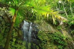 Cascade à écriture ligne par ligne de palmier images stock