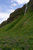 Cascade à écriture ligne par ligne de Seljalandsfoss en Islande Image libre de droits