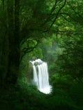 cascade à écriture ligne par ligne de Victoria de forêt humide Photo stock