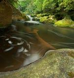 Cascade à écriture ligne par ligne dense de forêt Images libres de droits