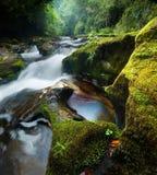 Cascade à écriture ligne par ligne dense de forêt Photo stock