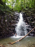 Cascade à écriture ligne par ligne des Caraïbes de forêt humide Photo stock