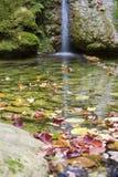 Cascade à écriture ligne par ligne et couleurs d'automne Photo libre de droits