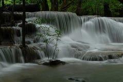 Cascade à écriture ligne par ligne profonde de forêt Photos libres de droits