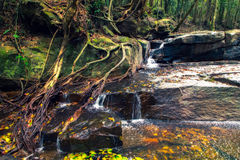 Cascade à écriture ligne par ligne profonde de forêt Images libres de droits
