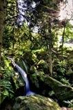 cascade à écriture ligne par ligne profonde de forêt photographie stock