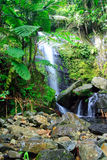 Cascade à écriture ligne par ligne tropicale photographie stock libre de droits