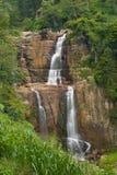 cascade à écriture ligne par ligne tropicale Images stock