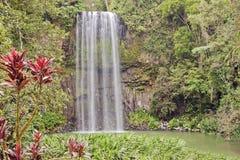 Cascade à écriture ligne par ligne tropicale de Millaa Millaa Images libres de droits