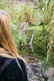 Cascade à la gorge de Masca dans Ténérife Photos stock