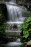 Cascade. Small cascade with foliage stock image