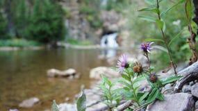 Cascade au lac caché, parc national de glacier Images libres de droits