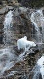 Cascade avec de l'eau congelé Image libre de droits