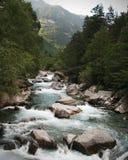Cascade avec de l'eau l'écoulement de l'eau au-dessus des roches dans une forêt Image libre de droits