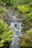 Cascade avec la forêt et les pierres vertes Photos stock