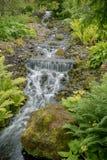 Cascade avec la forêt et les pierres vertes Photo stock