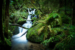 Cascade in black forest. Cascade with flowing water in black forest Stock Image